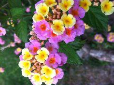 Preety flower