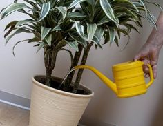Filléres trükk, hogy télen is szépek legyenek a szobanövényeid!
