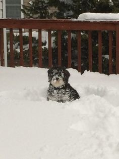 """Diane Roll of Harrisonburg says """"His first winter...absolutely LOVES the snow!"""" #WHSVsnow"""