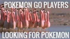 New trending GIF on Giphy. pokemon go looking for pokemon. Follow Me CooliPhone6Case on Twitter Facebook Google Instagram LinkedIn Blogger Tumblr Youtube (Favorite Meme Funny)
