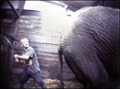 Image detail for -Elephant Abuser - The Prevention of Animal Cruelty
