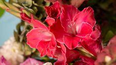 Princess Margaret, Pink Lady, Black Velvet, Flora, Garden, Plants, Gladioli, Garten, Lawn And Garden