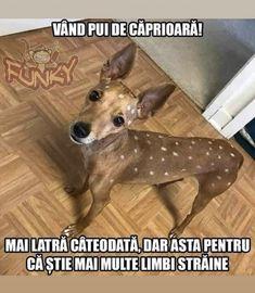 Creepypasta, Cute Animals, Jokes, Meme, Humor, Funny, Dog, Creepy Pasta, Pretty Animals