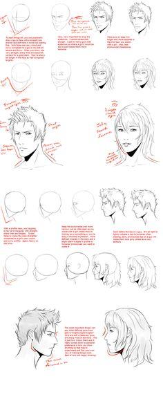 Male VS Female head-face tut by ~WingedGenesis5 on deviantART