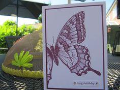 SU Swallowtail