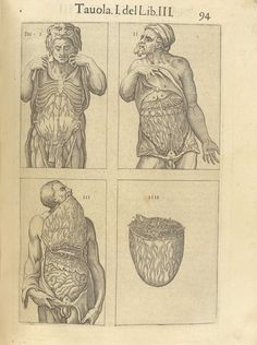 "Page 94 of Juan Valverde de Amusco's Anatomia del corpo humano, 1560 featuring four figures displaying the circulatory and digestive systems under the muscles of the abdomen."" From the collection of the National Library of Medicine. Visit: http://www.nlm.nih.gov/exhibition/historicalanatomies/valverde_home.html"