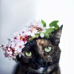 "(Beautiful Spring Maiden * * "" IF YOOZ SAY SO."""