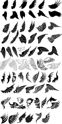 All diffrent kind of wings