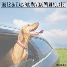Moving with your pet can be a great adventure for both of you-- make sure you have all of the essentials before the big day so the transition goes smoothly. Check out these tips for help!
