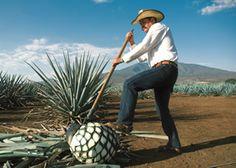 El tequila es una de las bebidas más emblemáticas de México, su producción se a convertido en una tradición en diversas regiones del país, descubre todo sobre esta bebida a través de The Book of Life Magazine.  www.thebookoflife.com.mx