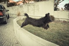 Mid Jump Amazing Photography, Middle, Dogs, Animals, Animales, Animaux, Pet Dogs, Doggies, Animal