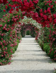 beautiful archway of flowers
