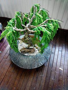 Étape 2 , arbre en perle , bougainvillier bonsaï . | mes ...