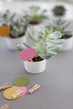succulent guest favors with paint chips and adorable mini paper clips