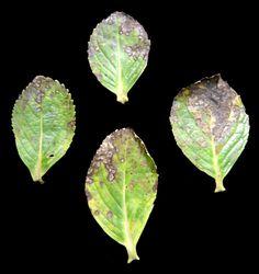 Doenças fúngicas | Jardim das Ideias STIHL - Dicas de jardinagem e paisagismo