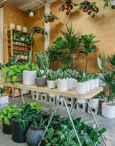 Plant aesthetic - Plant Places Peacock & Co – Plant aesthetic Best Indoor Plants, Cool Plants, Flower Shop Interiors, Garden Center Displays, Plant Aesthetic, Aesthetic Boy, Garden Shelves, Bathroom Plants, Garden Shop