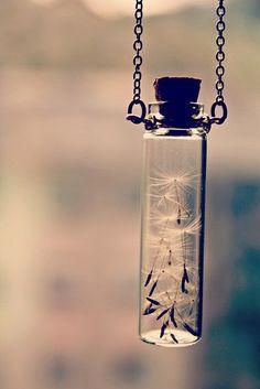 Dandelion seeds in a jar