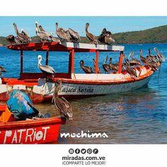 Feliz domingo desde las costas más hermosas de Venezuela. . . #MiradasMagazine #Miradas  #RevistaMiradas #MiradasDigital #Mercadeo #Tendencias #Arte #Tecnologia #Turismo #DestinoTuristico #Gastronomia #MiradaFotografica #Mochima #Lecheria.