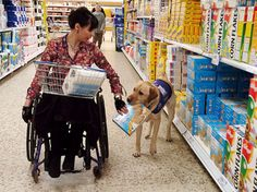 Service Animals | What is a Service Animal ?