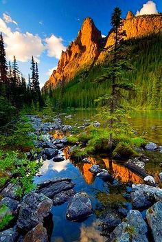 Lake O'Hara in Yoho National Park, Canada (by Ernie Fischhofer). It's a beautiful world Yoho National Park, National Parks, Terre Nature, Beautiful World, Beautiful Places, Landscape Photography, Nature Photography, Nature Green, Photos Voyages