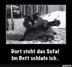 Best pictures, videos and sayings and there are tä - Lustige Tiere Hund - Katzen / Cat Cute Funny Animals, Funny Animal Pictures, Funny Cute, Cool Pictures, I Love Cats, Crazy Cats, Cool Cats, Good Morning Cat, Photo Facebook