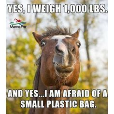And since it *might* get me, you better hold me. Just in case. Funny Horse Memes, Funny Horses, Funny Animal Memes, Cute Funny Animals, Horse Humor, Funny Horse Pictures, Funny Equine, Cowboy Humor, Pet Memes
