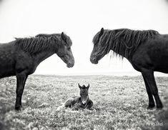 Pferd Fotografie schwarz-weiß Pferdefotografie  8 x 10 von kellya