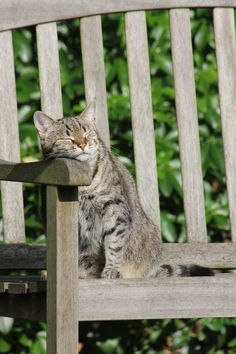 Twitter / EmergencyPuppy: Cat, in repose.
