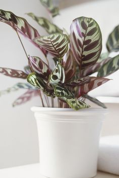 These low-light varieties won't want anything to do with your already crowded windowsill.