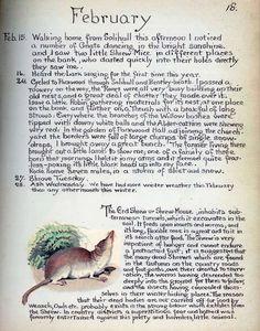 Feb notes - Morning Earth Artist/Naturalist Edith Holden