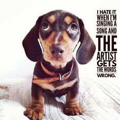 "18 Likes, 3 Comments - Dachshund Quotes & Pictures (@mydachshundfamily) on Instagram: ""Me too... . @daisyboos"""