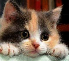 Are you ready to be bowled over by cuteness? #cats #kittens