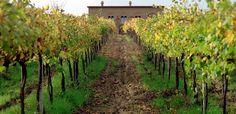 back to italy - Orvieto