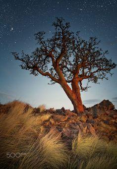 Tree & Stars - Photography by Carsten Meyerdierks www.carsten-meyerdierks...