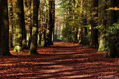 Autumn walk by Gerhard Hoogterp