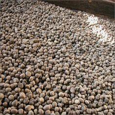A sea of seeds