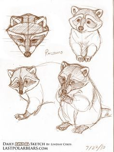 drawing stuff Cómo dibujar un mapache? Animal Sketches, Art Drawings Sketches, Easy Drawings, Animal Drawings, Pencil Drawings, Drawing Animals, Animals Watercolor, Raccoon Drawing, Animal Doodles