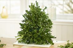 Learn how to make a DIY Christmas tree that's perfect for your table, desk or small area. Add some extra flair with our Christmas tree decoration ideas! Christmas Advent Wreath, Christmas Table Centerpieces, Tabletop Christmas Tree, Christmas Tree Decorations, Flower Decorations, Christmas Diy, Xmas, Christmas Floral Arrangements, Flower Arrangements