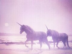 this is the unicorns walking across the ocean when the waves are crashing