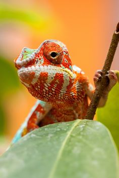 cute lizard.  Referenced by WHW1.com: WebSite Hosting - Affordable, Reliable, Fast, Easy, Advanced, and Complete.©