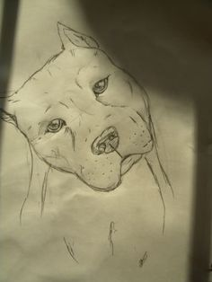 I get a bit lazy when i draw long haired dogs, but i wanna get better with it. Dogs I drew: Pencil Drawings Of Animals, Cool Art Drawings, Animal Sketches, Art Drawings Sketches, Pitbull Drawing, Pikachu Drawing, Chicano Drawings, Drawing Superheroes, Pictures To Draw