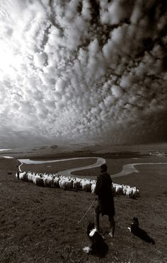"""""""But He led forth His own people like sheep And guided them in the wilderness like a flock,"""" Psalm 78:52."""