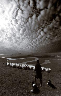John Hooper - The Shepherd, 1982