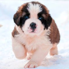 So very cute and beautiful