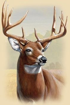 Wildlife Paintings, Wildlife Art, Animal Paintings, Deer Paintings, Whitetail Deer Pictures, Deer Photos, Pictures Of Deer, Creature Drawings, Animal Drawings