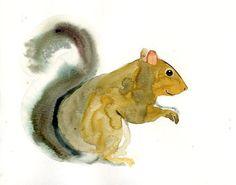 SQUIRREL original watercolor   dimdi