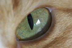 15 Cat Eye Close-Ups