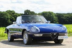 1981 Alfa Romeo Spider 2000  (picture 1 of 6)