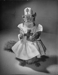 Happy Nurses Day all you caregivers!!| Tommy Tucker: The Cutest And Most Fashionable Squirrel Of The 1940s