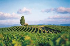 Oenotourisme en Languedoc Roussillon. Travel in Languedoc France for wine lovers.